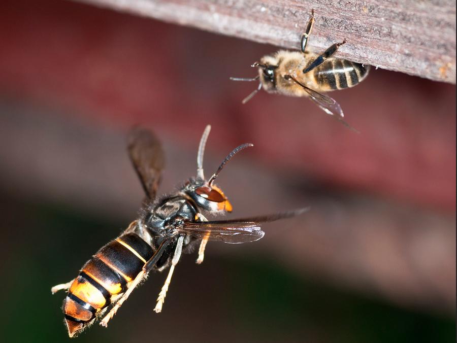 Concello de Muras | Loitando polo noso mel |