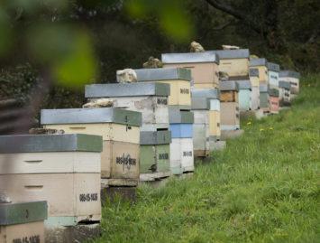 Concello de Muras | Axudas á apicultura |