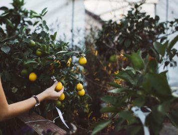 Concello de Muras | Obradoiro de silvicultura e fruticultura |