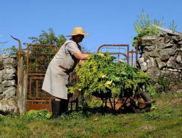 Concello de Muras | CHARLA INFORMATIVA: gandaría e agricultura |