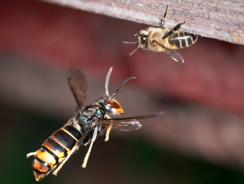 Concello de Muras   Loitando polo noso mel  