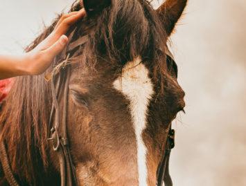 """Concello de Muras   Roteiro """"Observación dos cabalos no Xistral""""  """