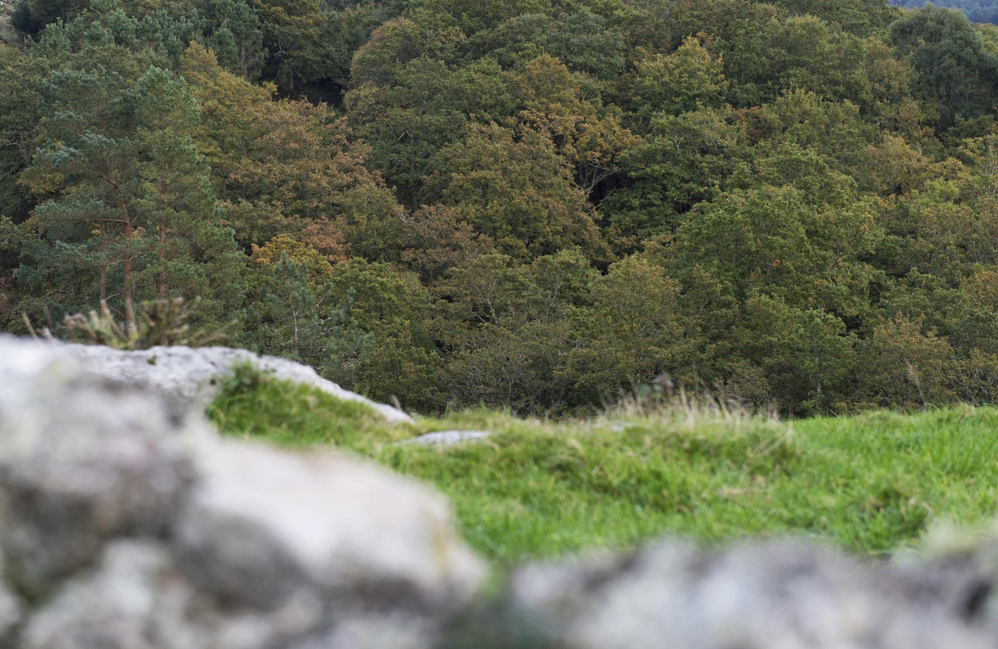 Concello de Muras | Axudas a plantacións forestais |