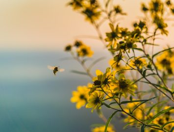Concello de Muras | Aproveitamentos forestais e viaxe apícola |