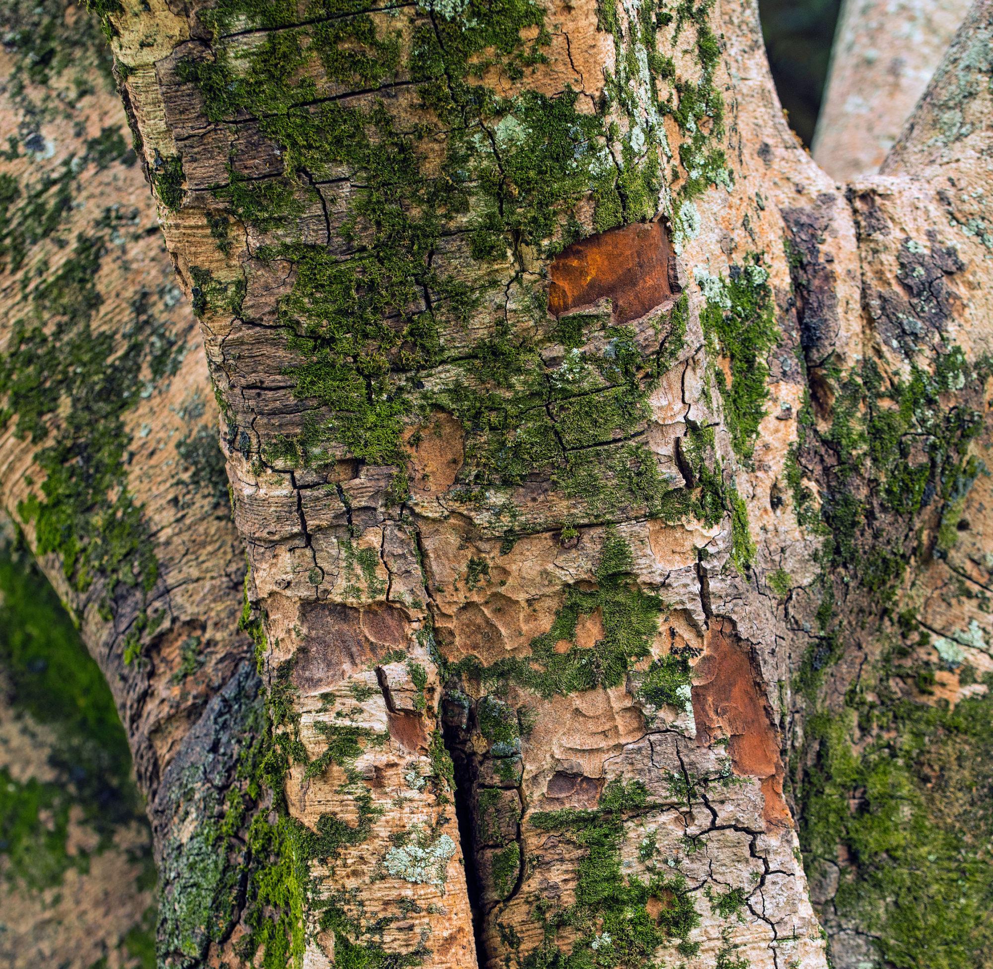 Concello de Muras   Cualificacións aspirantes peóns forestais  