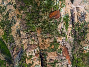 Concello de Muras | Cualificacións aspirantes peóns forestais |