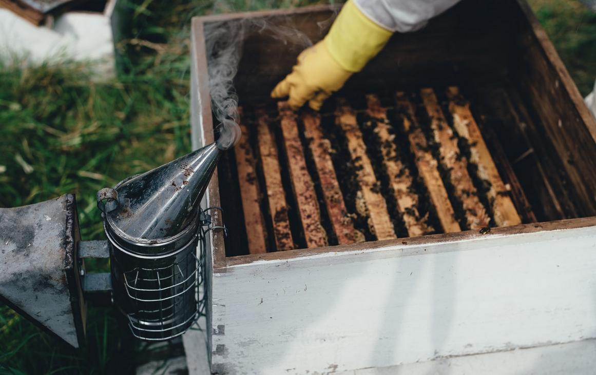 Concello de Muras | Curso de iniciación á apicultura |