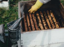 Concello de Muras | Curso de apicultura |