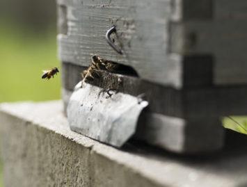 Concello de Muras | Axudas apicultura + relación beneficiad@s agricultura ecolóxica |