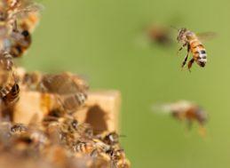 Concello de Muras   Curso gratuíto de iniciación á apicultura  