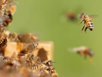 Concello de Muras | Curso gratuíto de iniciación á apicultura |